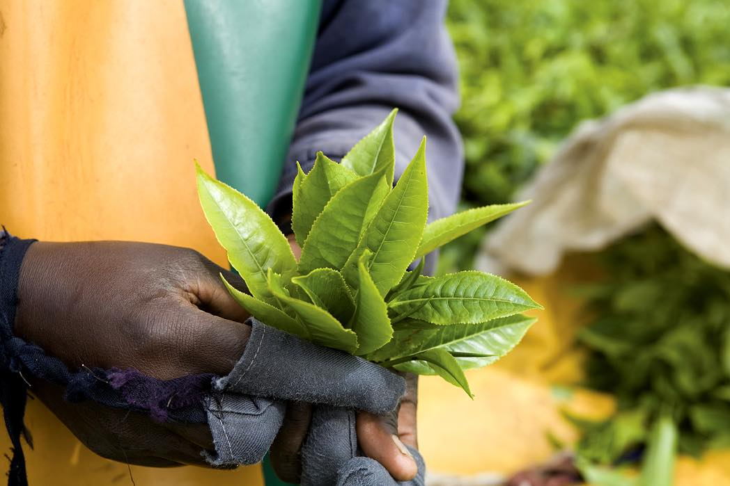 Sustainable sourcing – a future imperative