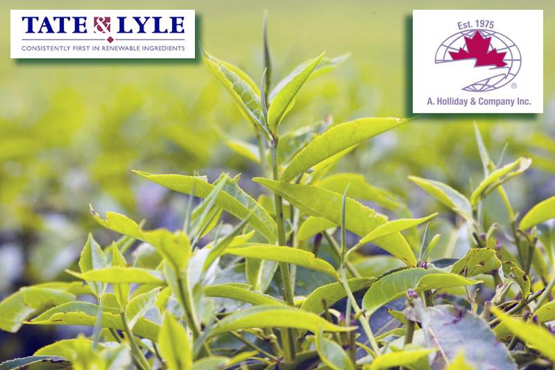 Tate & Lyle agrees distribution rights for new green tea extract