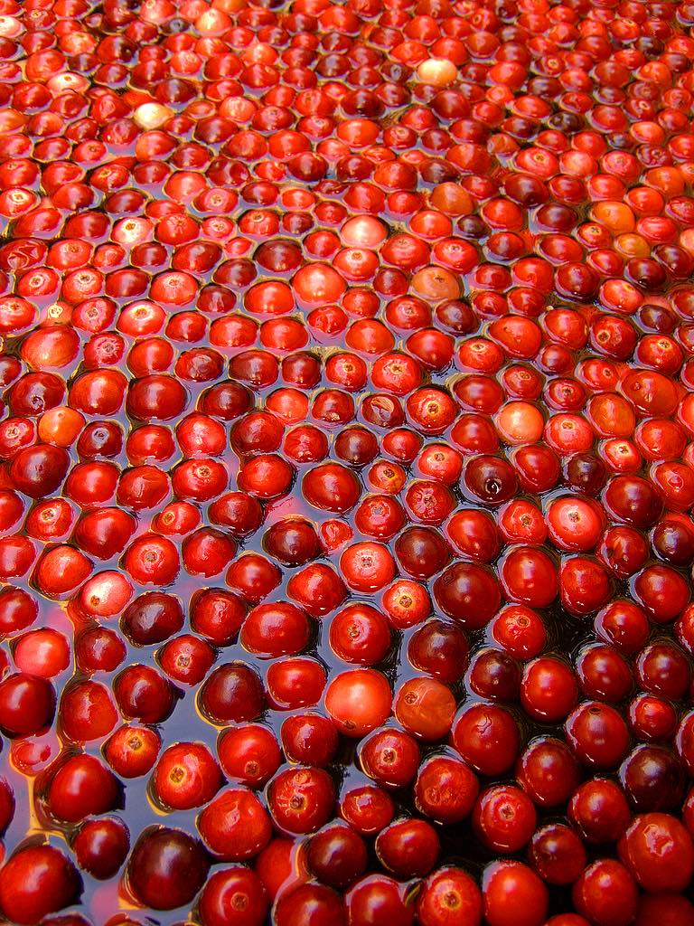 Ocean Spray holds first cranberry concentrate auction