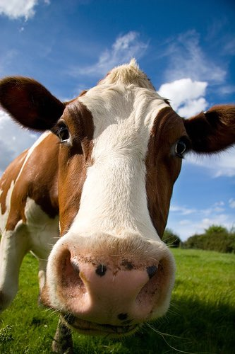 €9m grant to help Great Britain's livestock sector