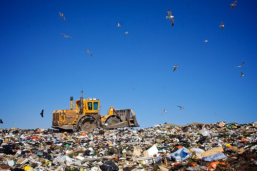 PET recycling not always the best option, says new report