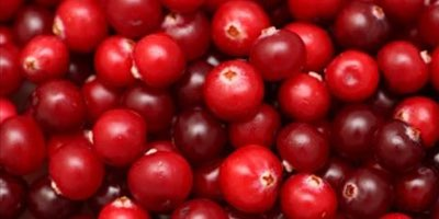 Ocean Spray reduces 2010 crop forecast