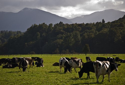 Shanghai Pengxin Group to buy 16 New Zealand dairy farms