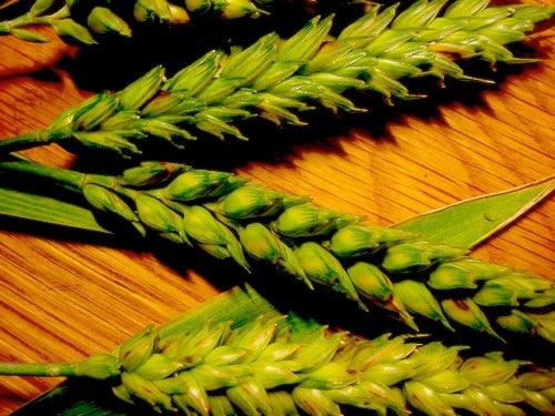 NFU releases mycotoxin tests statement