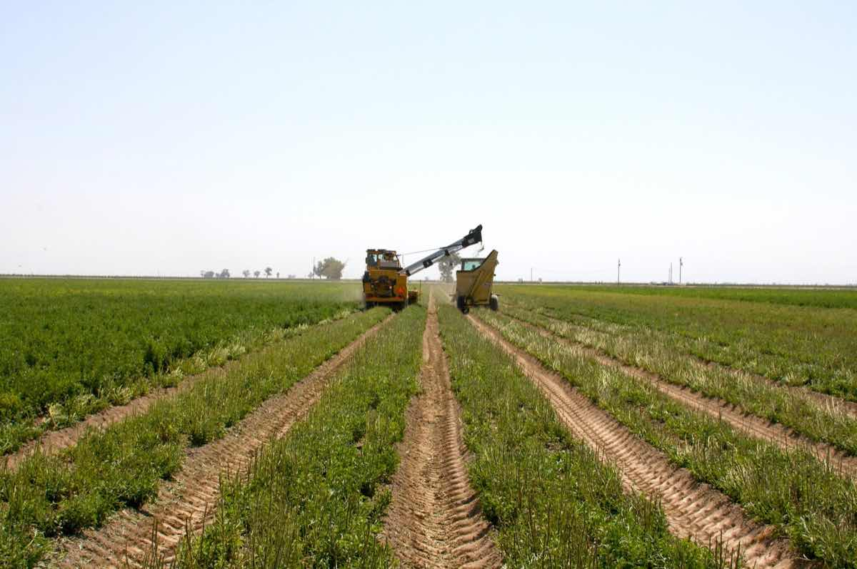 S&W Seed Company starts first stevia harvest