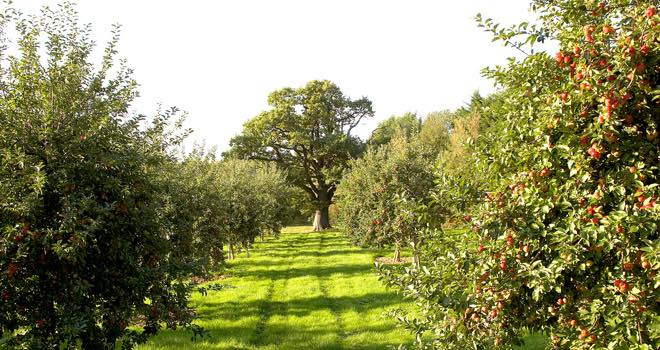 Aston Manor invests in 1,000 acres of new orchards