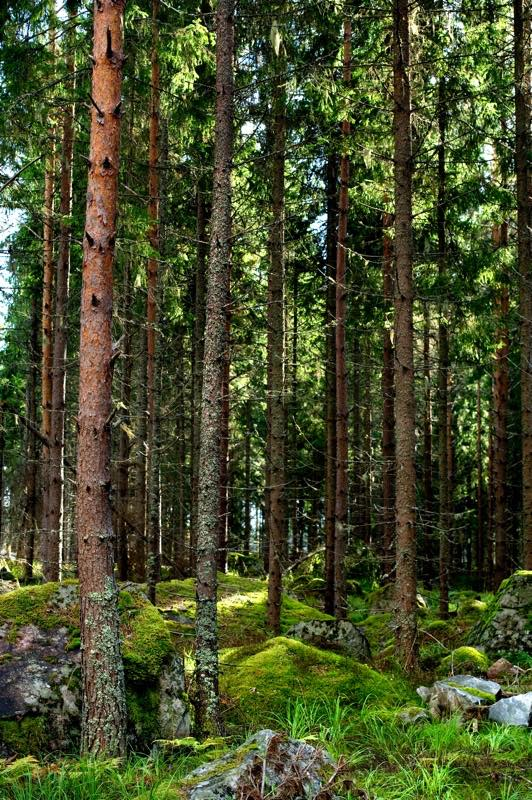 Tetra Pak works with Ikea and Kingfisher to assess FSC impact