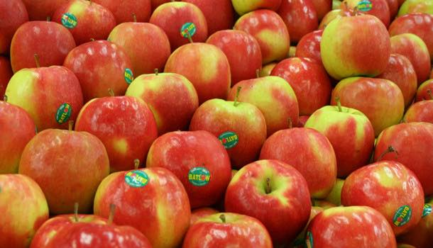 USDA 'reignites debate' with approval of first genetically modified apple