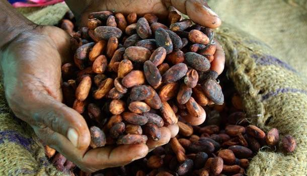 Cargill and Mondelēz partnership will support cocoa producing communities