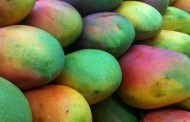 EU lifts import restrictions on Indian mangos following pest scare