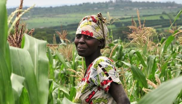 Challenge barriers facing women farmers, Fairtrade Foundation urges