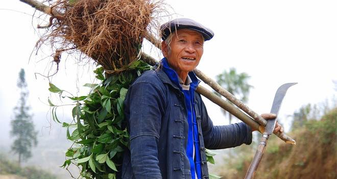 Cooperation needed to ensure food security for China's growing population