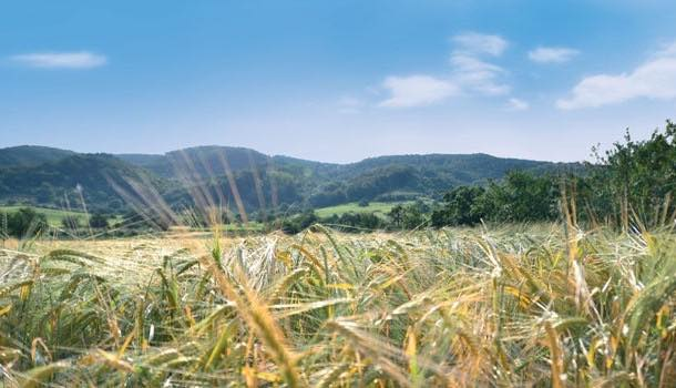 Döhler develops method to make gluten-free beer from barley and wheat