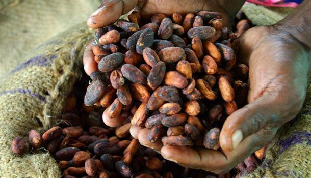Archer Daniels Midland extends Ivorian cocoa training program