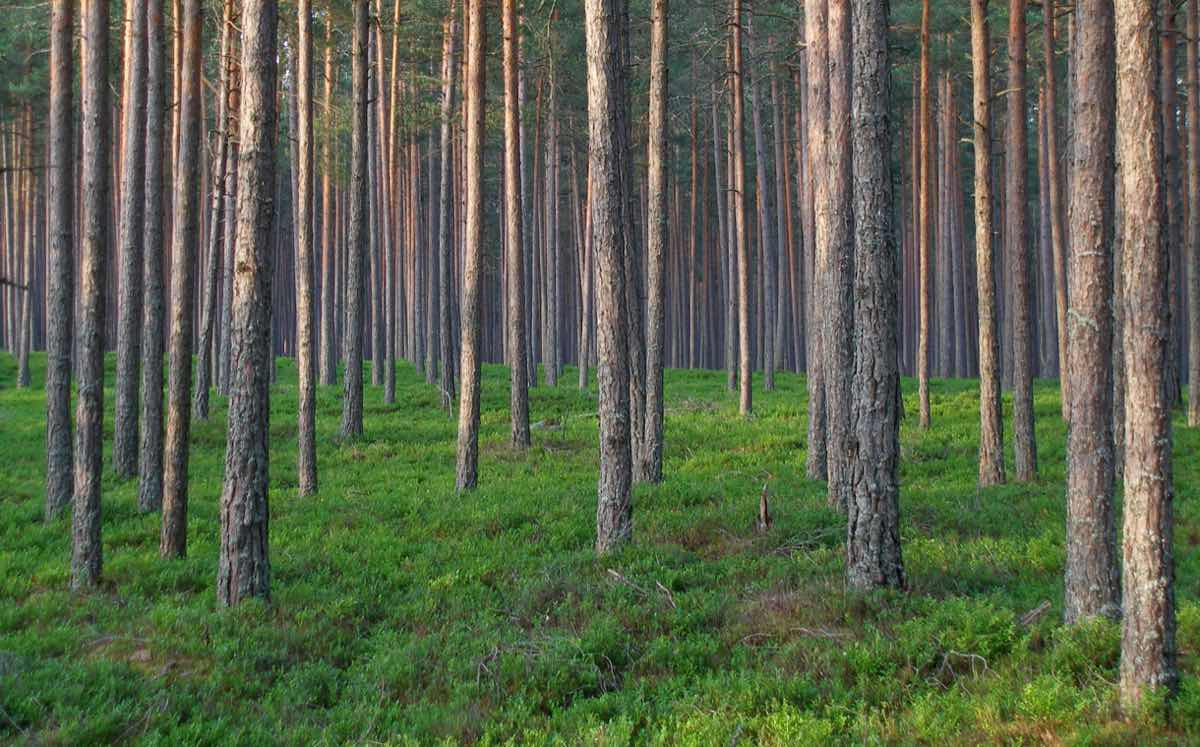 Nestlé to use Starling satellite service to monitor deforestation