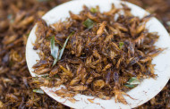 Maple Leaf invests in edible insect producer Entomo Farms