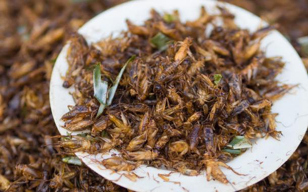 'Helping consumers to catch the edible insects bug'