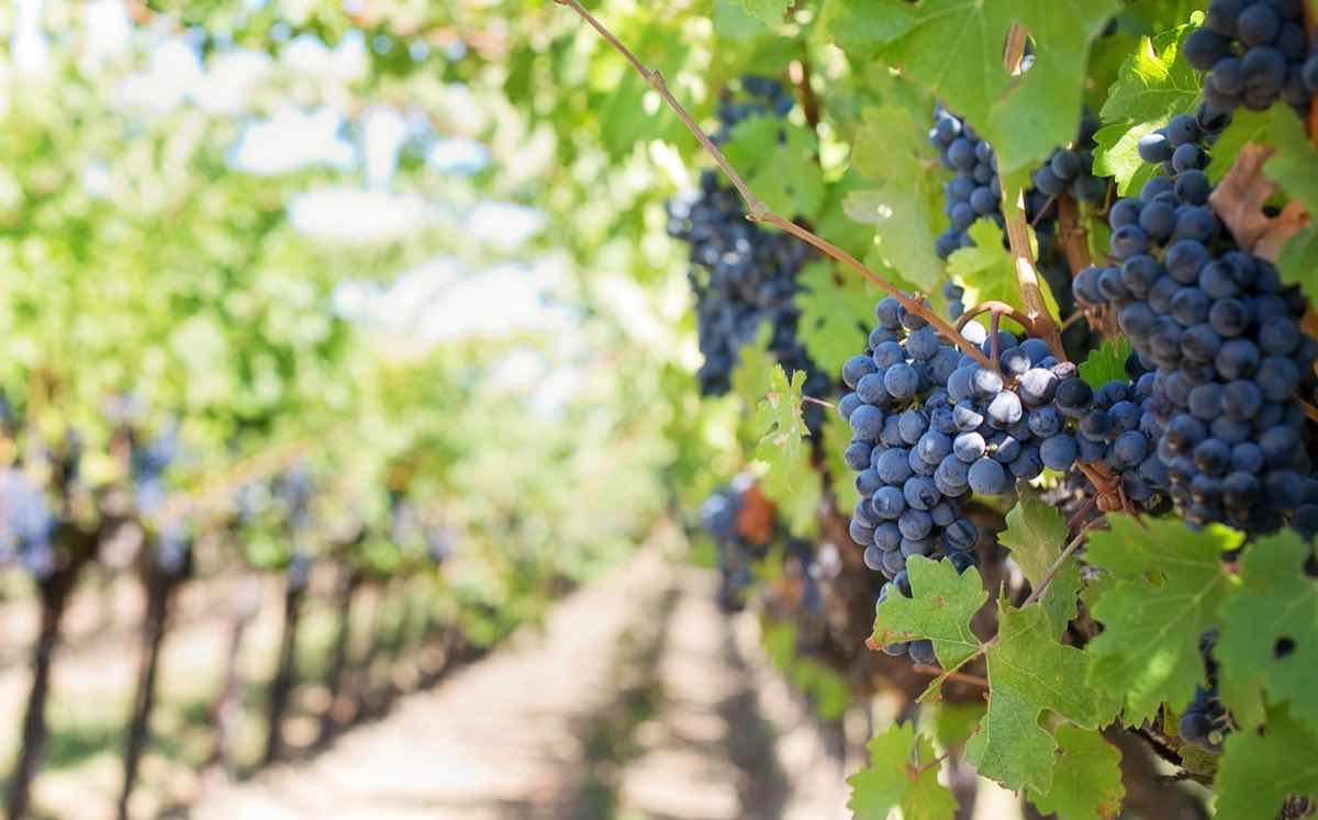 Value of Australian wine exports up 11% despite dip in US demand