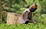Firmenich and Veolia join fund to 'mutually benefit' smallholders