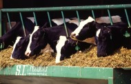 New study urges more efficient nitrogen use in global livestock sector