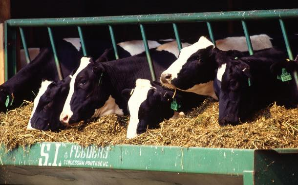 Nestlé, Unilever and others form animal welfare coalition