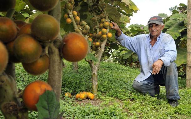 Coca-Cola India to help farmers with launch of new fruit juice
