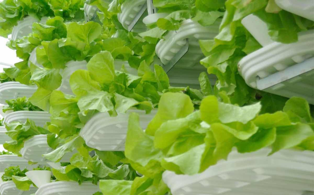 Podcast: Can vertical farming replace traditional methods?