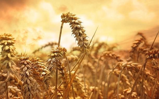 African wheat imports 'to shift to sub-Saharan Africa' – Rabobank
