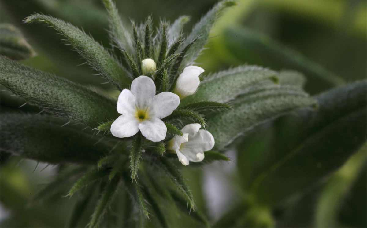 Interview: Trufflestap into the omega-3 benefits of ahiflowers