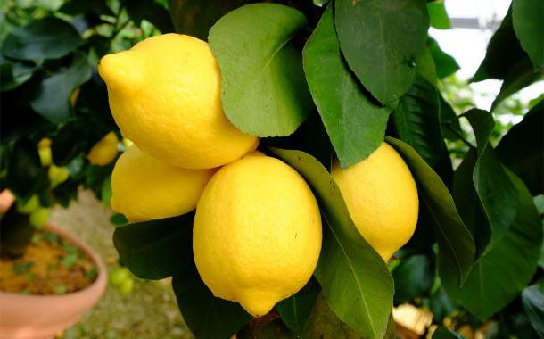 Givaudan develops 'anniversary collection' of citrus flavours