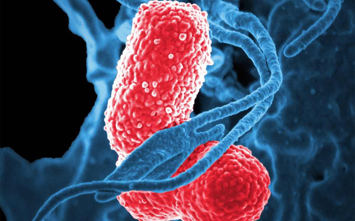 'Deeper understanding of the human microbiome to drive opportunity'