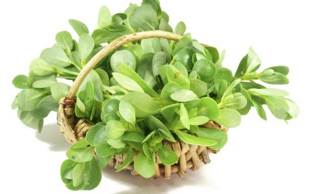 Purslane extract 'contributes to blood glucose control', trial says