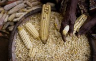 'Over 85% of countries' made progress on food security – index