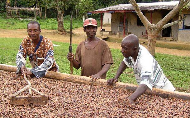 Cargill to share €1.4m in premiums among Cameroonian farmers