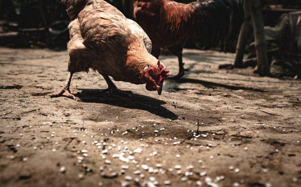 Olam International invests $150m in two Nigerian poultry facilities