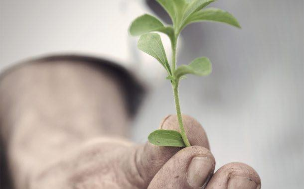 PureCircle makes 'breakthrough' in sequencing genome of stevia