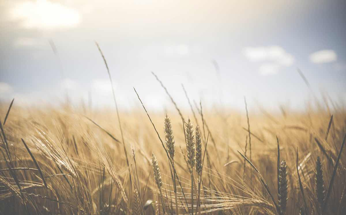 New 20m euro fund launched for Irish agriculture and innovation