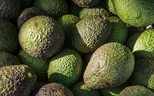 Costa Group expands in avocados with acquisition of Lankester