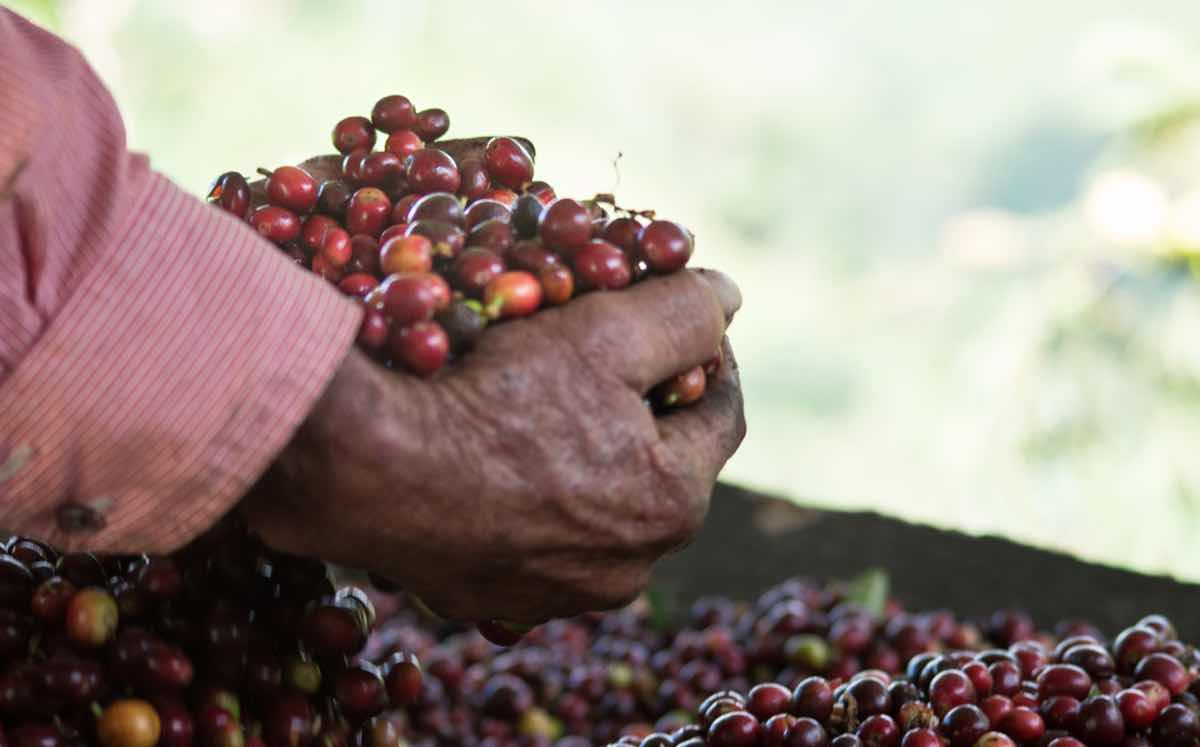 Starbucks announces support for young farmers and female co-ops