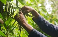 Danone and Mars pledge support for Madagascan vanilla farmers