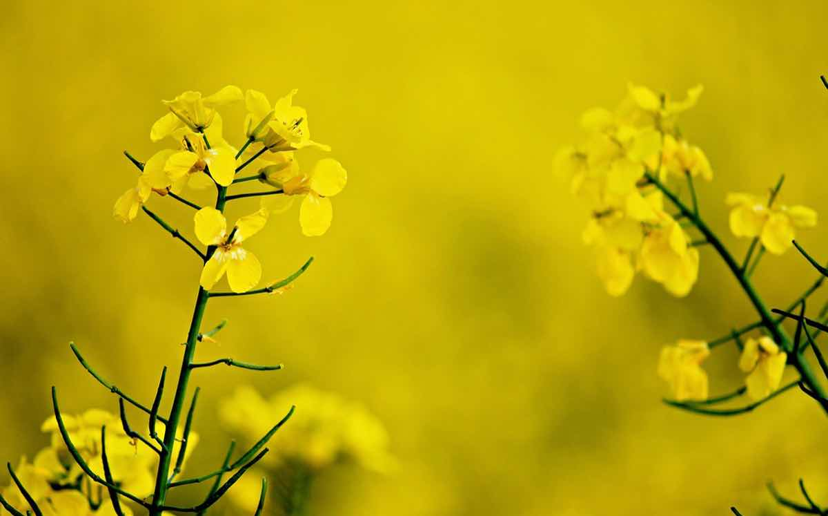 Louis Dreyfus targets growth in China with new oilseed facility