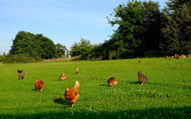 Ikea to improve chicken welfare with new sustainability scheme