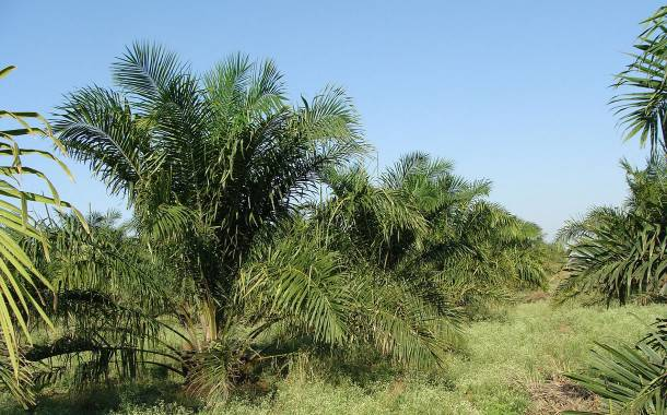 Palm oil players fund new radar system to detect deforestation