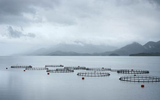 US researchers hope to reduce high aquaculture mortality rates