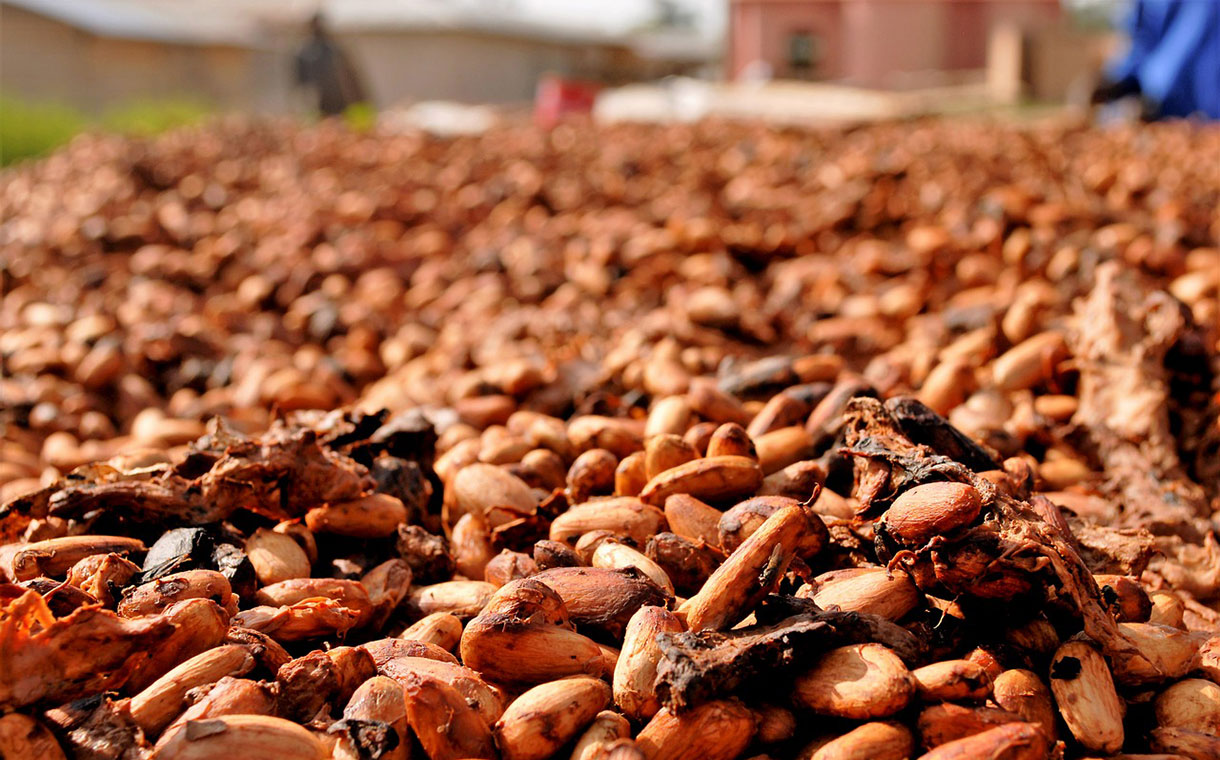 Hershey to stop sourcing cocoa from areas with deforestation