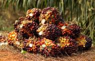 Mondelēz excludes 12 suppliers from its palm oil supply chain