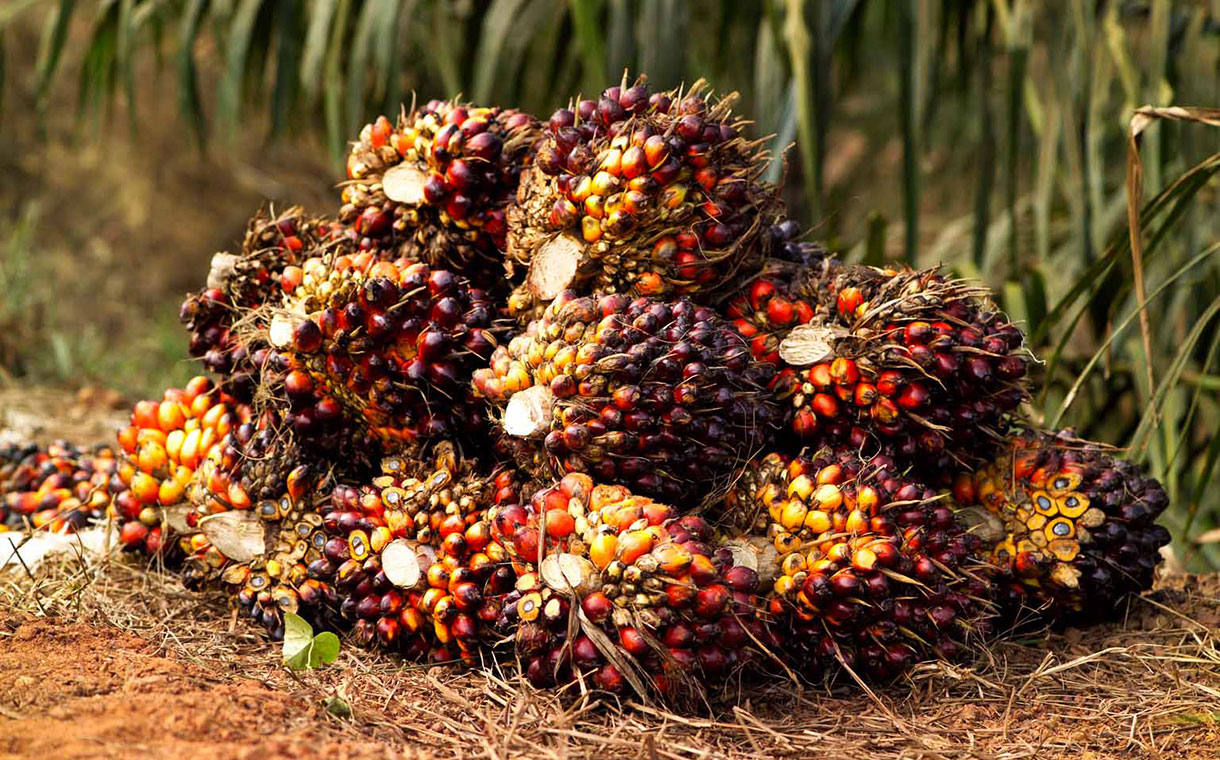 Nestlé restored as RSPO member following palm oil pledge