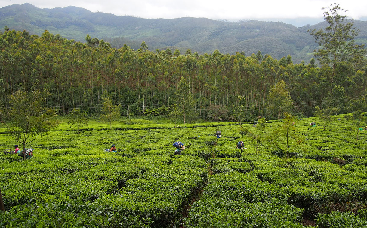 Twinings invests to improve lives of tea workers in north-east India