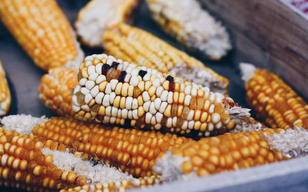 Randox Food Diagnostics 'offers the technology for mycotoxin screening in varied crops'