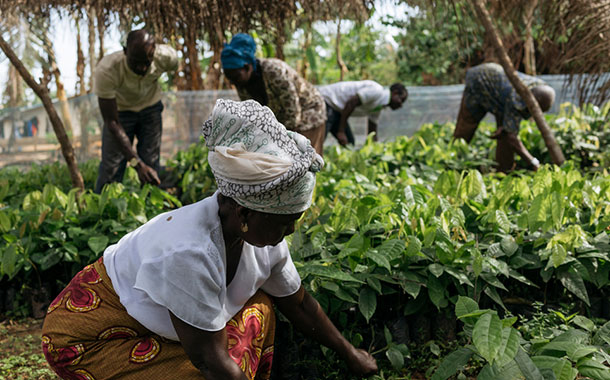 Hershey to invest $500m to fund sustainable cocoa programme